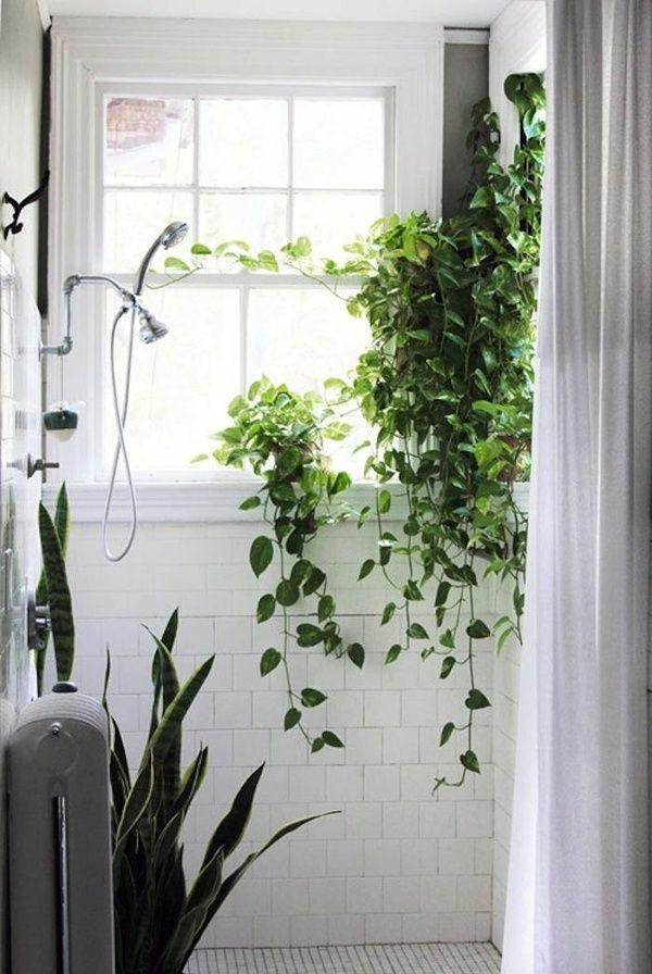 Welche Zimmerpflanzen Brauchen Wenig Licht