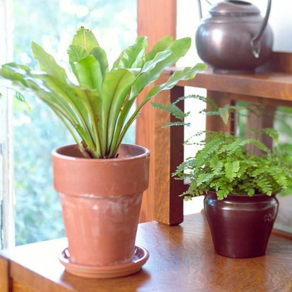 Welche Zimmerpflanzen Brauchen Wenig Licht? Bluhende Zimmerpflanzen Lichtbedarf