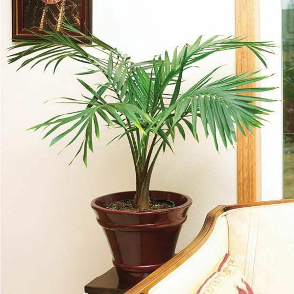 wohnzimmer wohnideen zimmerpalmen arten bilder topfpflanzen