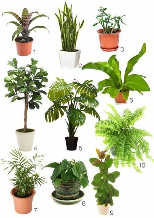 zimmergrünpflanzen bestimmen pflanzenarten