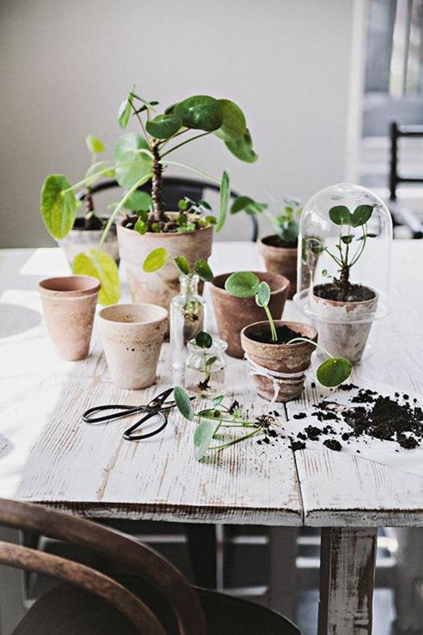 Zimmergrünpflanzen Bilder Und Inspirierende Deko Ideen ...