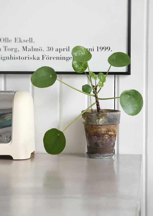 zimmergrünpflanzen bestimmen topfpflanze grüne zimmerpflanzen