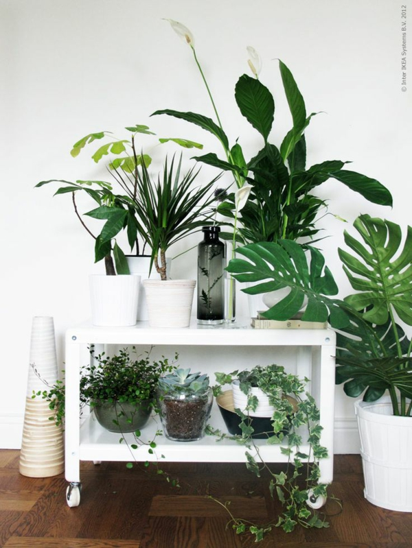 zimmergrünpflanzen bilder topfpflanzen grüne zimmerpflanzen