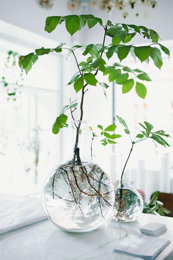 zimmergrünpflanzen bilder topfpflanzen pflege