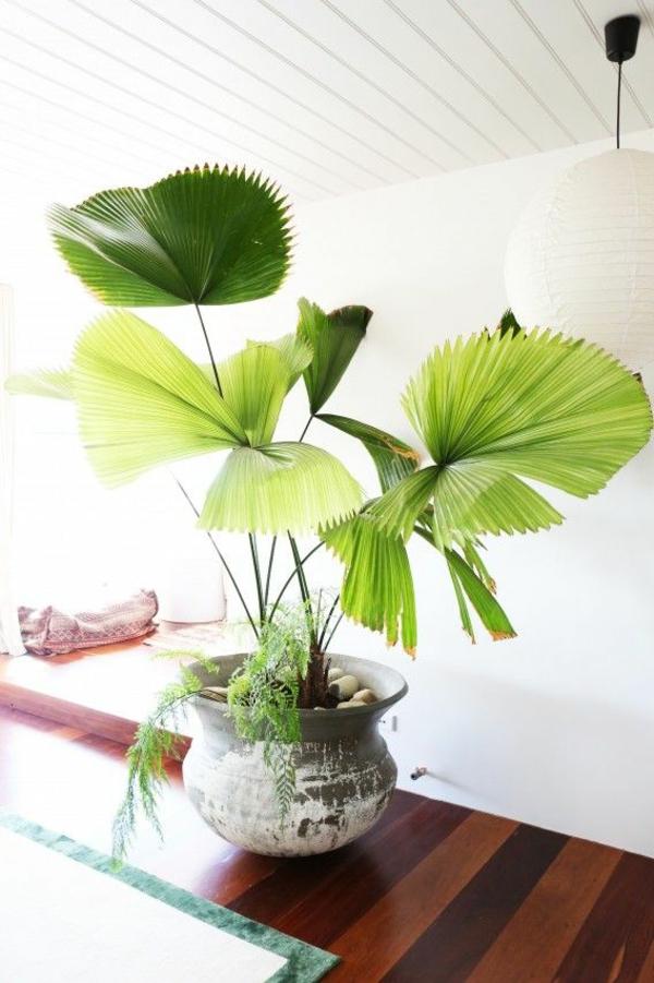 wohnzimmer palme pflege:Wohnzimmer palme pflege : Pflegeleicht Drachenbaum Pflege Pictures to