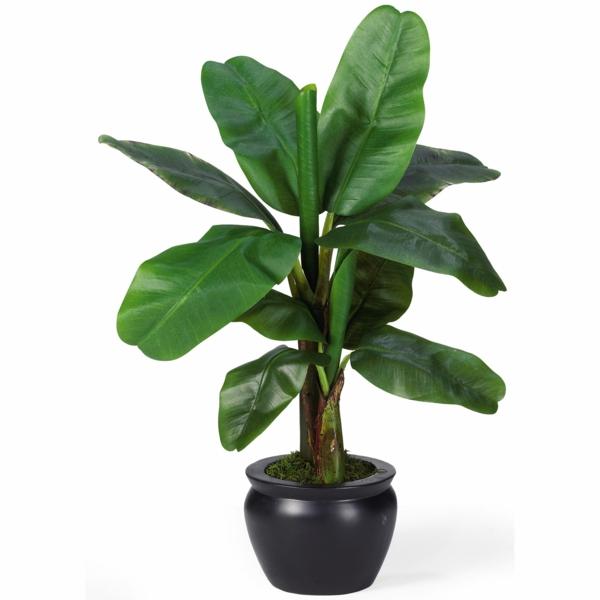 zimmerpalmen bilder topfpflanzen grünes wohnen