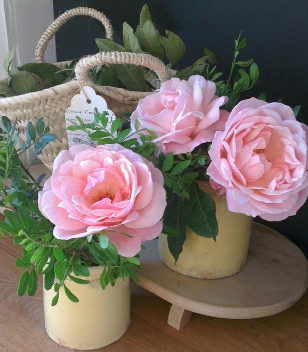 beliebteste zimmerpflanzen topfpflanzen blühend topfrose