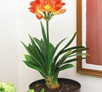 Bl hende zimmerpflanzen farbige deko ideen mit pflanzenarten - Katzen giftige zimmerpflanzen bilder ...