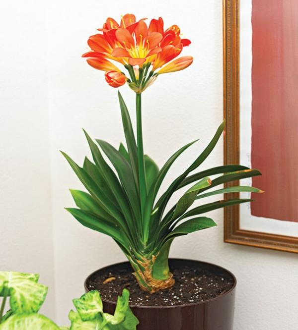 Bl hende zimmerpflanzen farbige deko ideen mit pflanzenarten for Design zimmerpflanzen