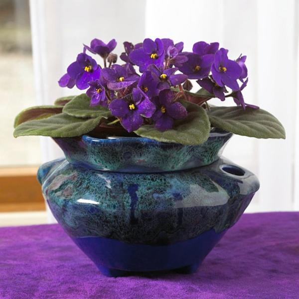 zimmerpflanzen blühend saintpaulia ionantha usambaraveilchen topfpflanzen