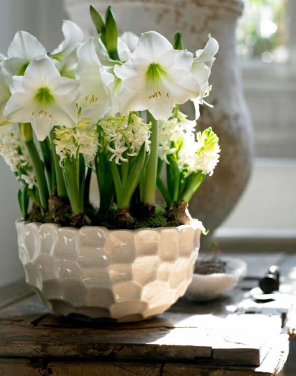 zimmerpflanzen blühend topfpflanzen weiß hyazinthen amaryllis rittersterne