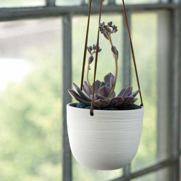 zimmerpflanzen hängend blumenampel topfpflanzen sukkulenten