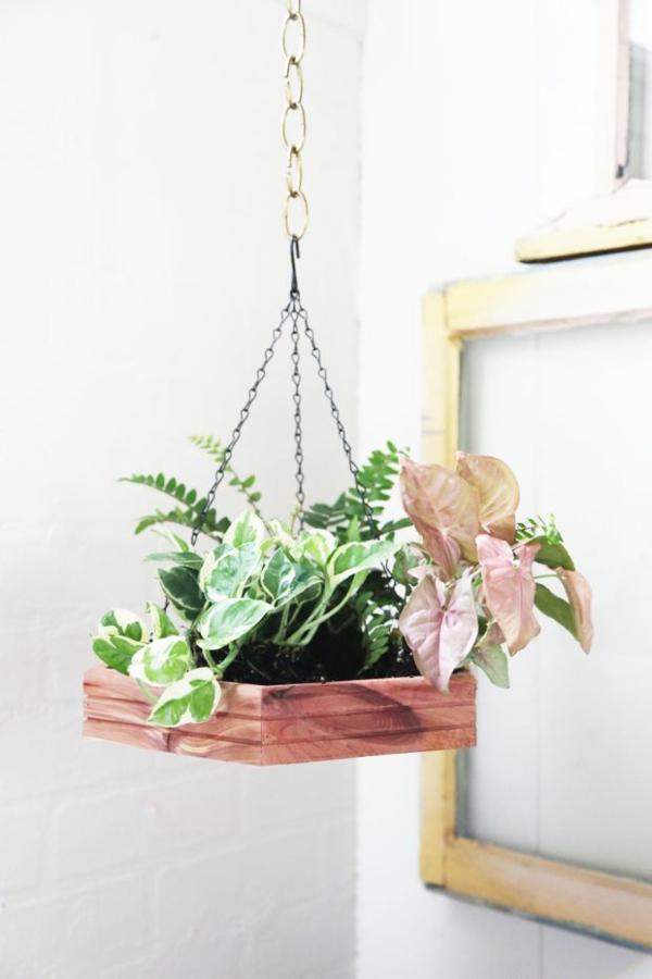 zimmerpflanzen hängend deko ideen blumenampel topfpflanzen