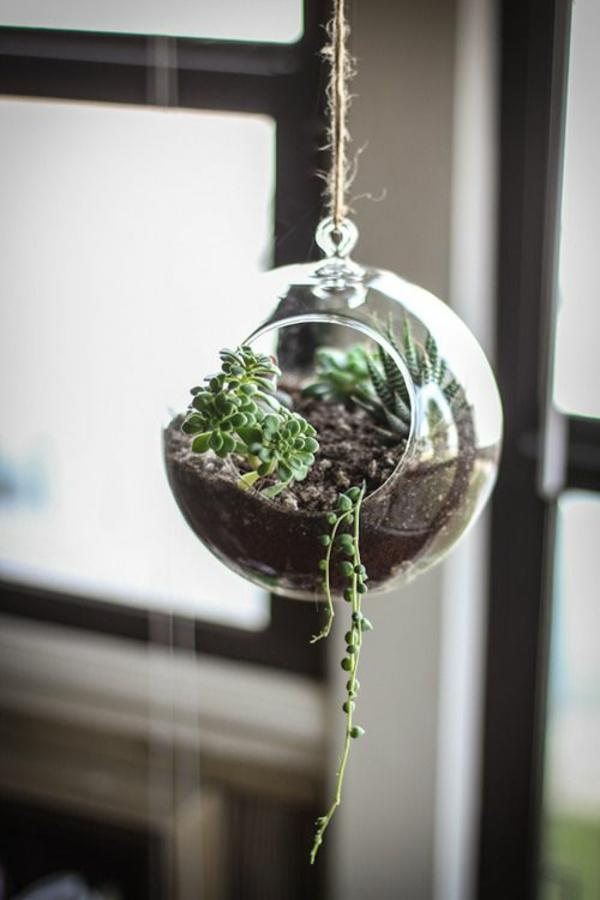 zimmerpflanzen hängend grüne einrichtungsideen pflanzampel sukkulenten glassphäre