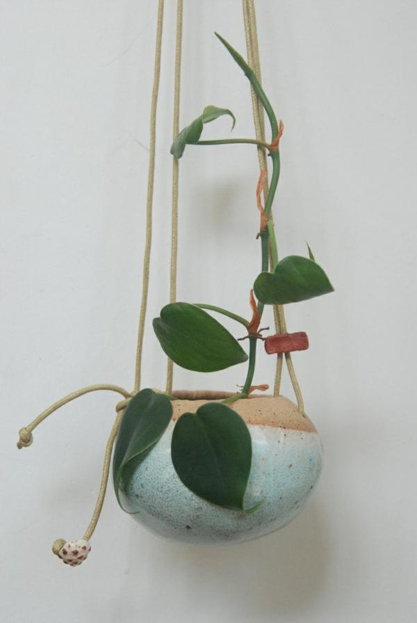 zimmerpflanzen hängend kletterpflanze blumenampel topfpflanzen