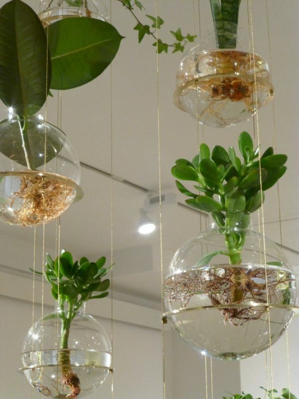 zimmerpflanzen hängend topfpflanzen geldbaum gummibaum jungpflanzen