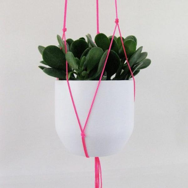 zimmerpflanzen hängend topfpflanzen geldbaum