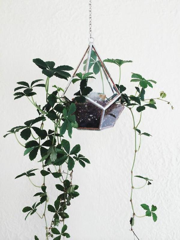 zimmerpflanzen hängend topfpflanzen terrarium diamant pflanzgefäß designer ideen