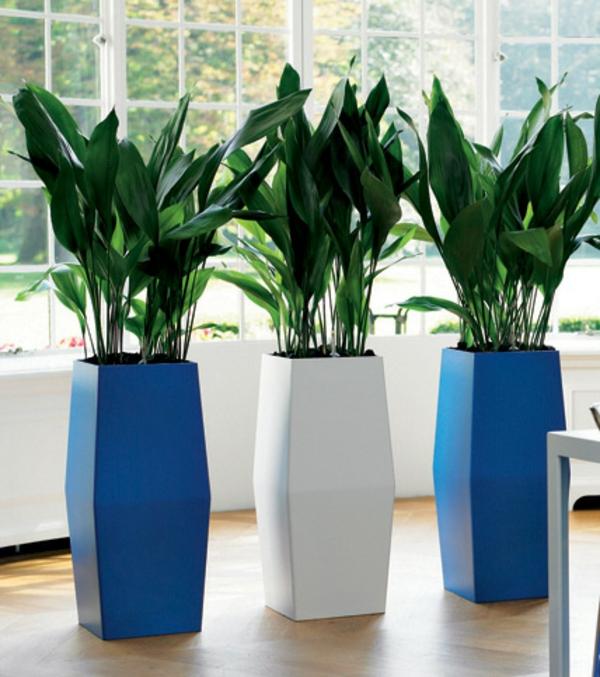 Aspidistra Zimmerpflanzen für dunkle Standorte bodentopf