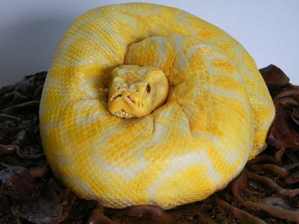gelb glasur Torten tolle Tortendeko Tortenfiguren schlange