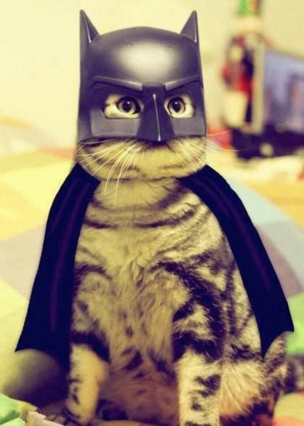 Halloween Kostüme Haustiere batman katze