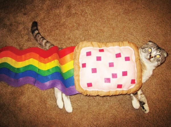 Halloween für Haustiere bunt regenbogen