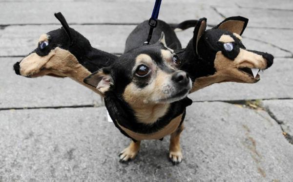 Halloween Kostüme für Haustiere dreiköpfig hund