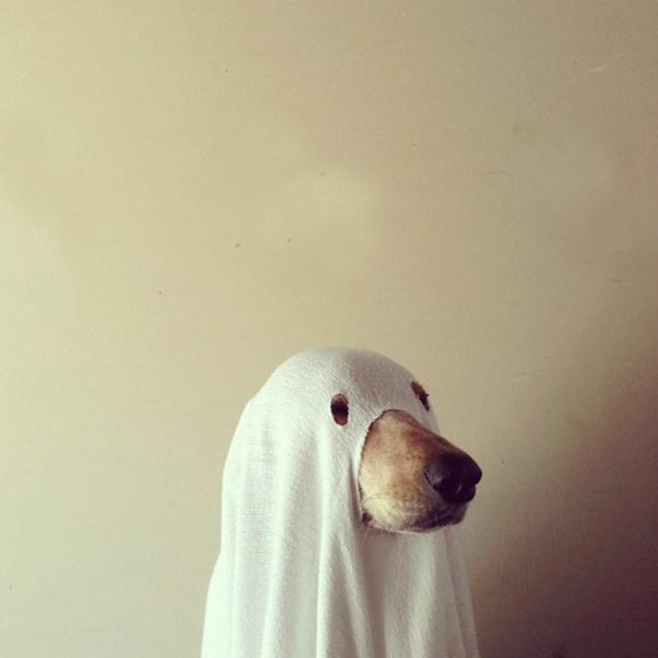 Halloween Kostüme Haustiere geist hund