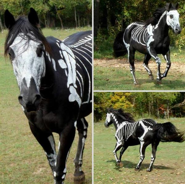 Halloween Kostüme Haustiere geist pferd