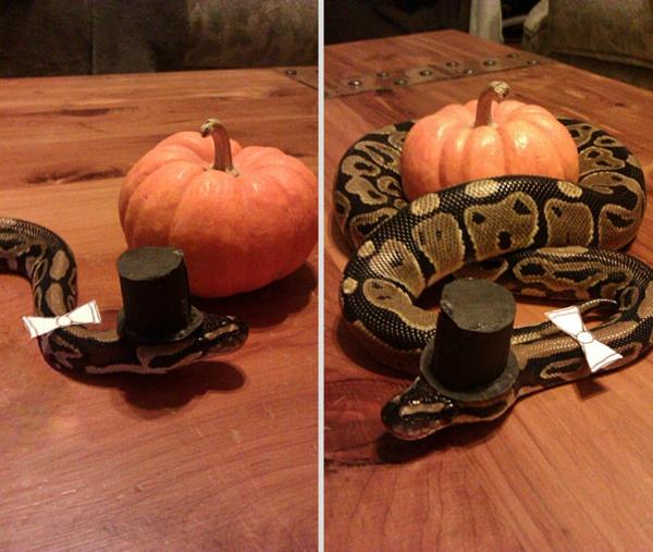 Halloween Kostüme Haustiere herr Pythonschlange