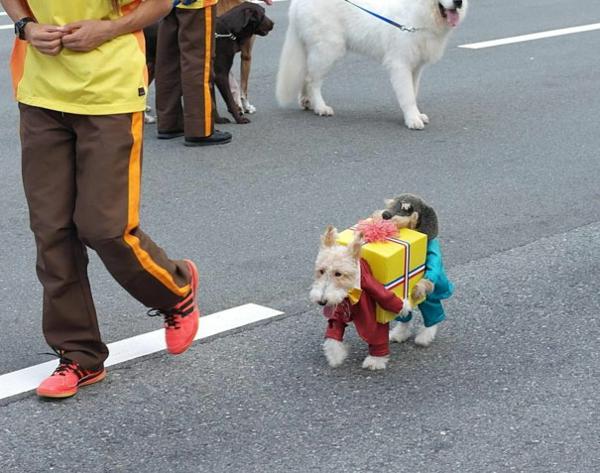 Halloween Kostüme für Haustiere hunde geschenk
