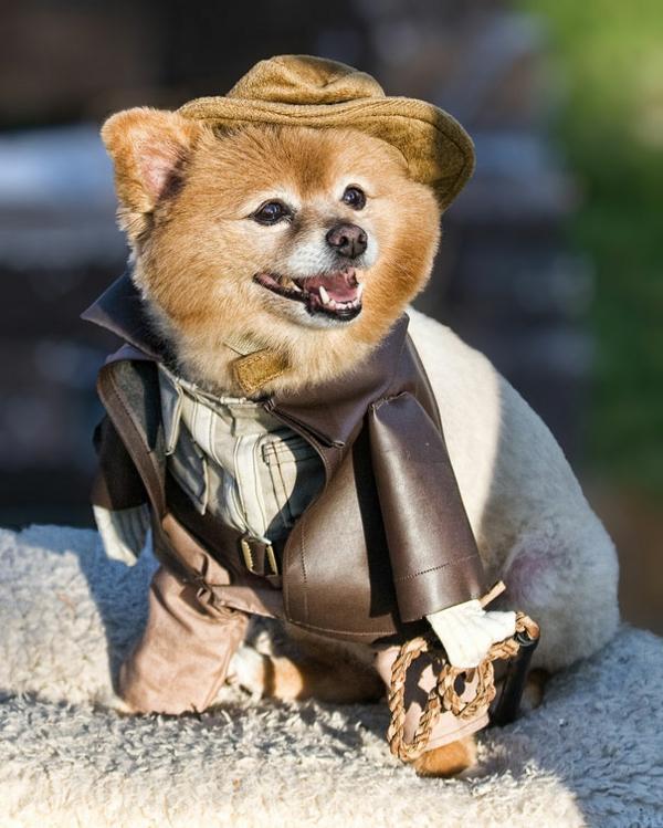 Halloween Kostüme für Haustiere indiana jones