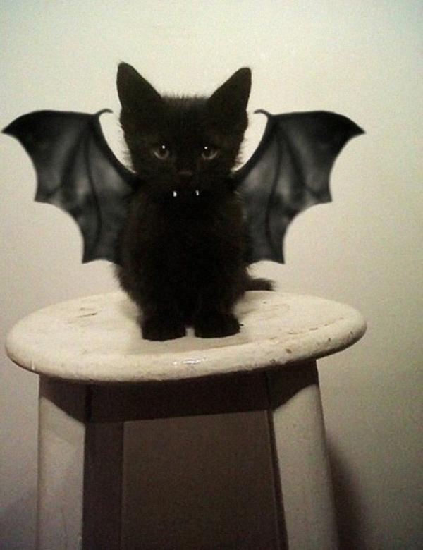 Halloween Kostüme Haustiere katze fledermaus