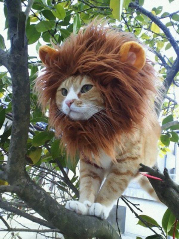 Halloween Kostüme interessant Haustiere katze löwe