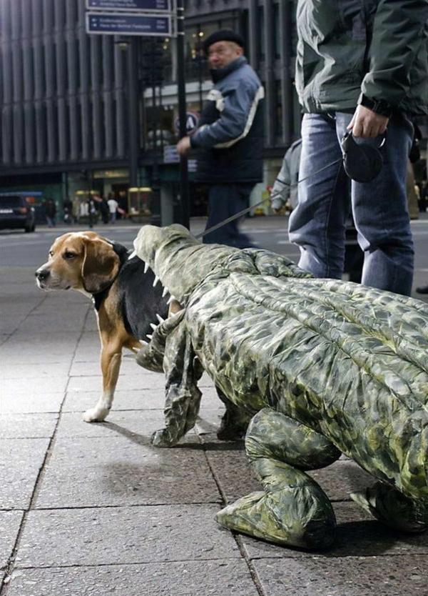 Halloween Kostüme originell Haustiere krokodil