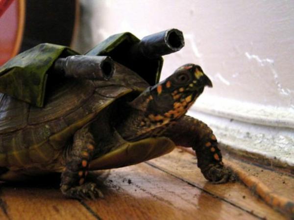 Halloween Kostüme für Haustiere schildkröte