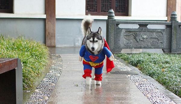 Halloween Kostüme für Haustiere spaziergang