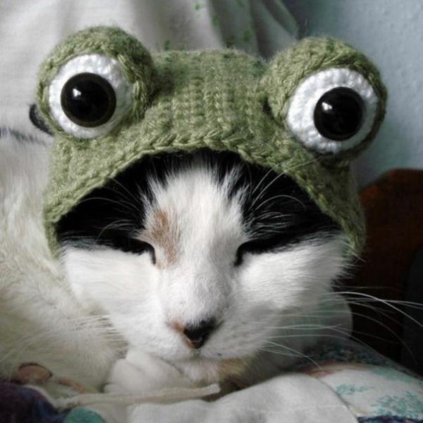 Halloween Kostüme für Haustiere strickwaren frosch