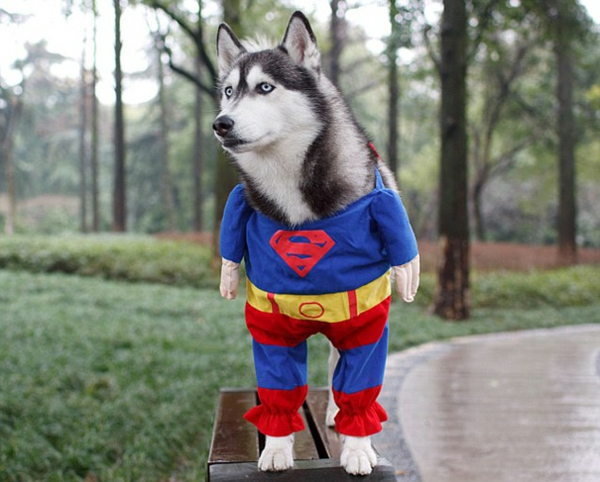 Halloween Kostüme für super hund