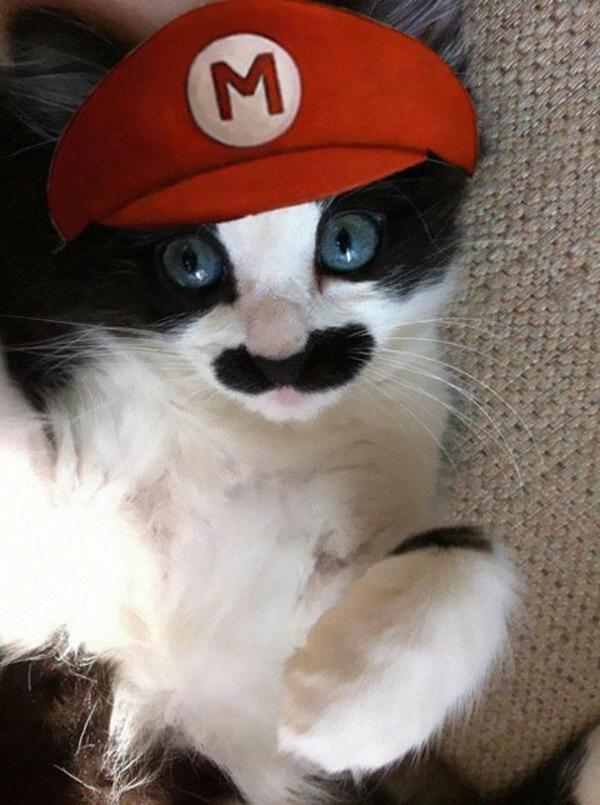 Halloween Kostüme für Haustiere super mario