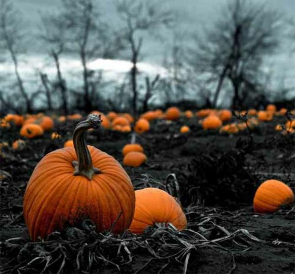 Horror Halloween Bilder Den Vollkommenen Augenblick