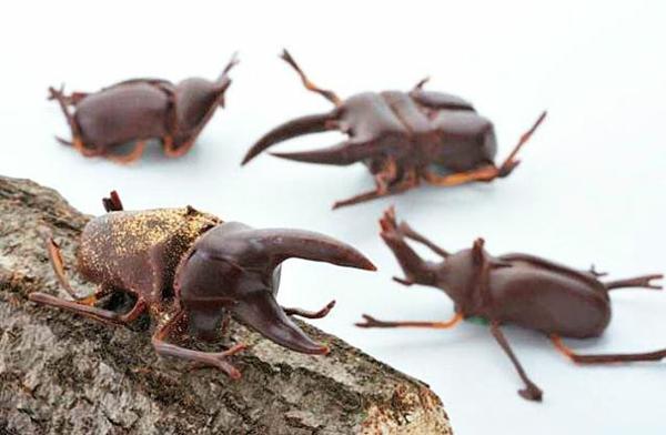 Schokolade Formen kunstvoll ideen design ungeziefer