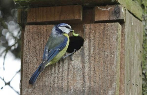 cooles vogelhaus selber bauen