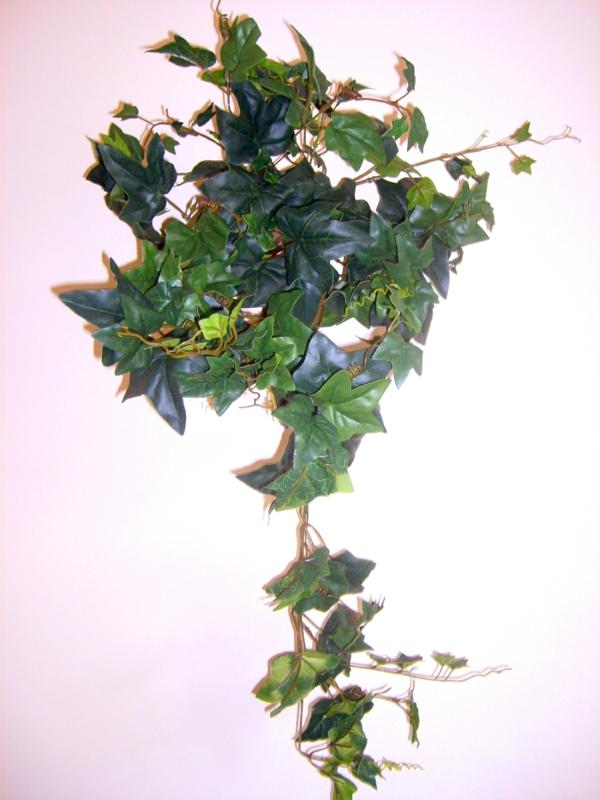 efeu tute Zimmerpflanzen für dunkle Standorte