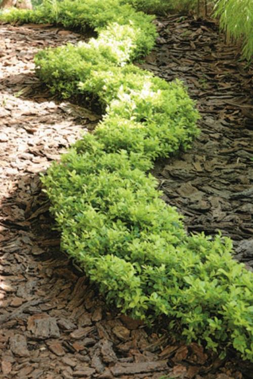 gartengestaltung und landschaftsbau gartenpflanzen gartenideen