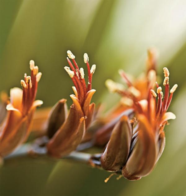 gartengestaltungsideen innenhof pflanzenarten