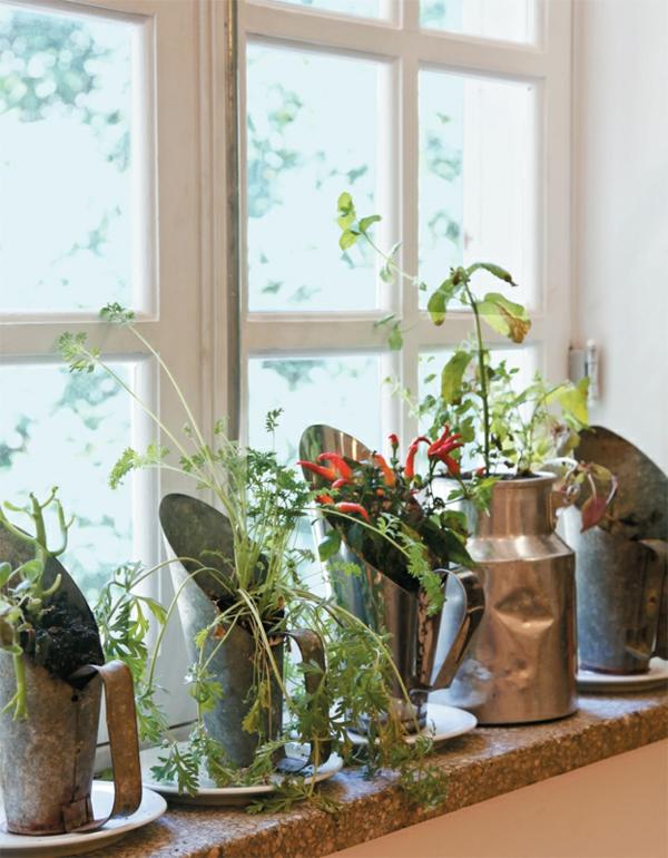 gemüsepflanzen an der fensterbank