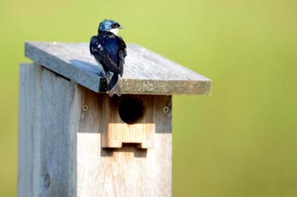 schlichtes vogelhaus bauen
