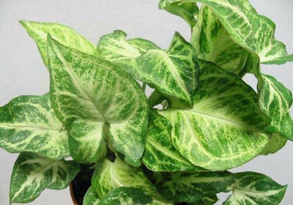 Zimmerpflanzen Für Dunkle Ecken zimmerpflanzen für dunkle standorte geeignet