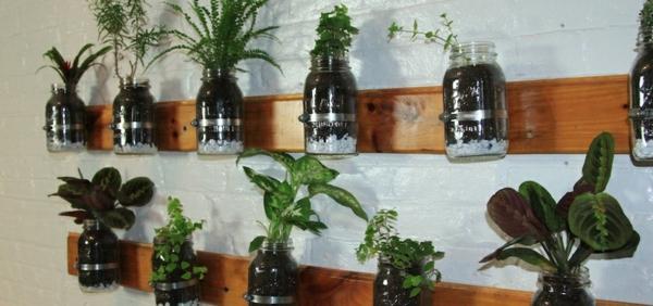 Kr uterpflanzen immer friche kr uter handgreifbar zu - Plantas aromaticas interior ...